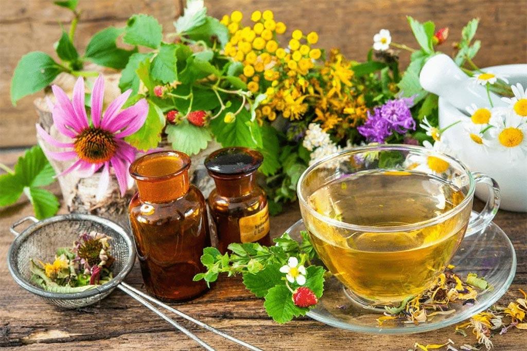 Травы: от лекарства до отравы