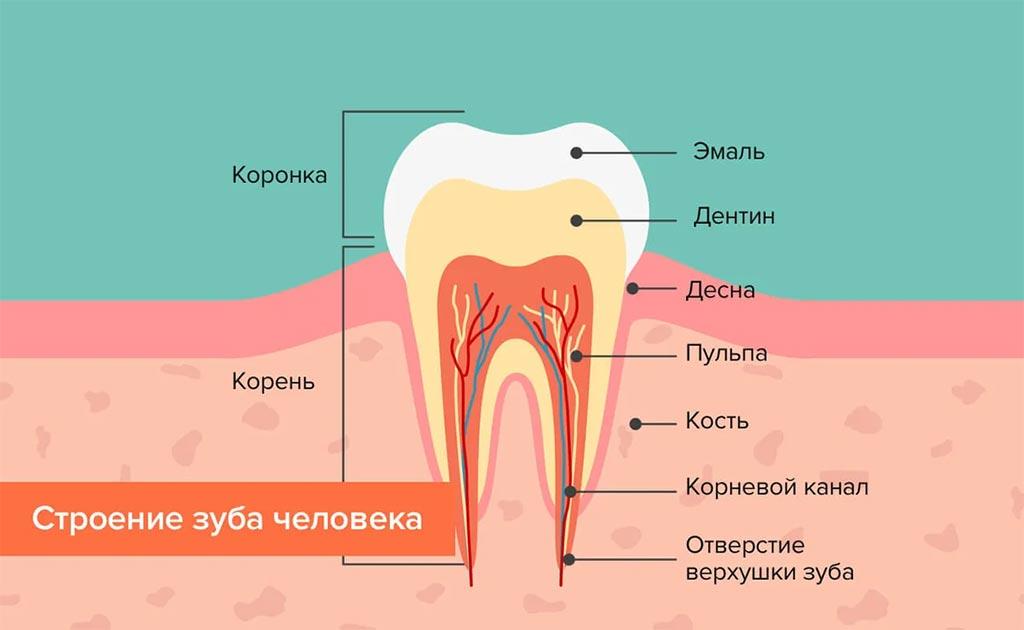 Почему зубы болят так сильно