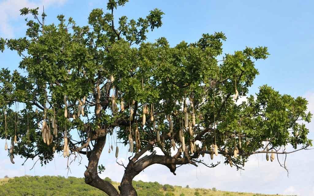 Продукты на деревьях