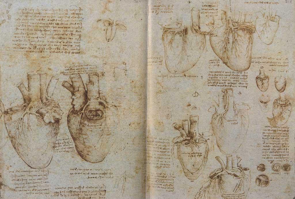 Пять вопросов о сердце человека