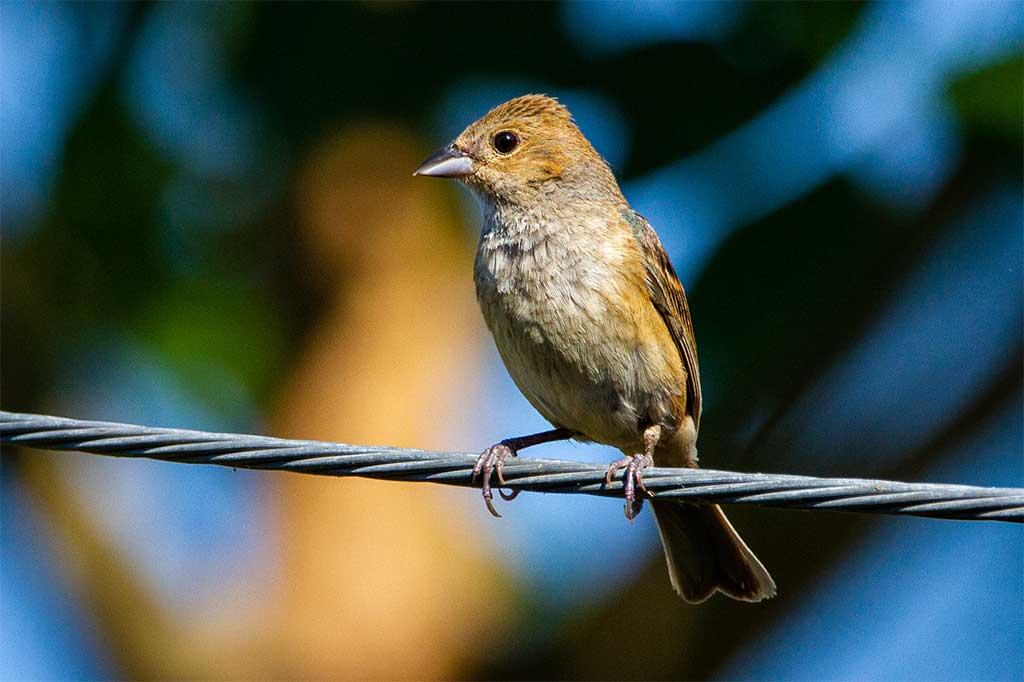 Почему птиц не бьёт током на проводах?